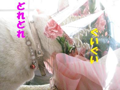 b0151748_136181.jpg