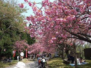 2010年 倶利迦羅さん八重桜まつり_c0208355_17192396.jpg
