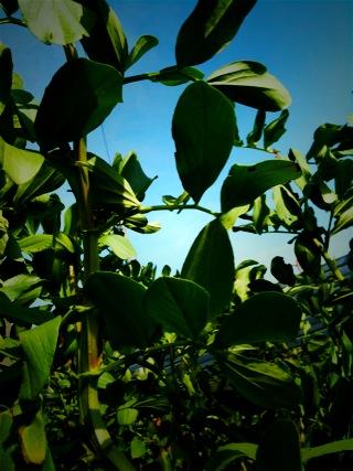 自然_e0158970_1150850.jpg