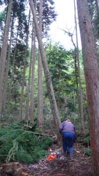 山へ行こう!小国杉まるごと体感ツアー・・・間伐作業_b0112371_1448628.jpg