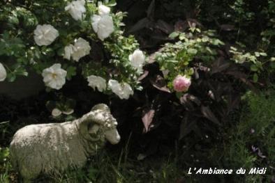 盛りの薔薇 Vol.Ⅰ_c0228386_2120032.jpg