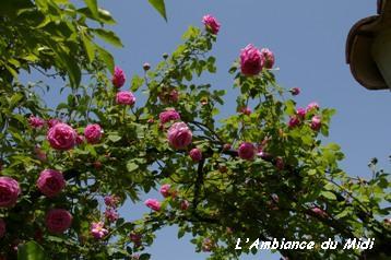 盛りの薔薇 Vol.Ⅰ_c0228386_21392530.jpg