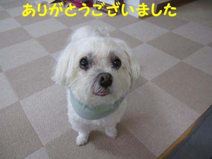 f0145192_1628381.jpg