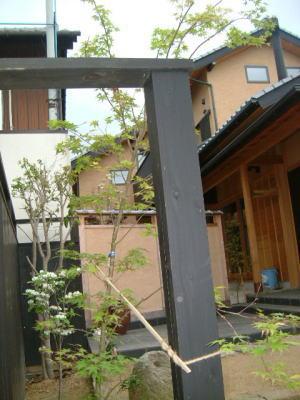 仏生山の家 植樹_e0064493_11384784.jpg