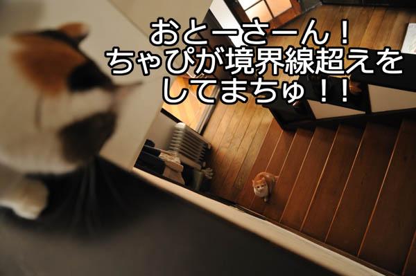 b0141397_11535042.jpg