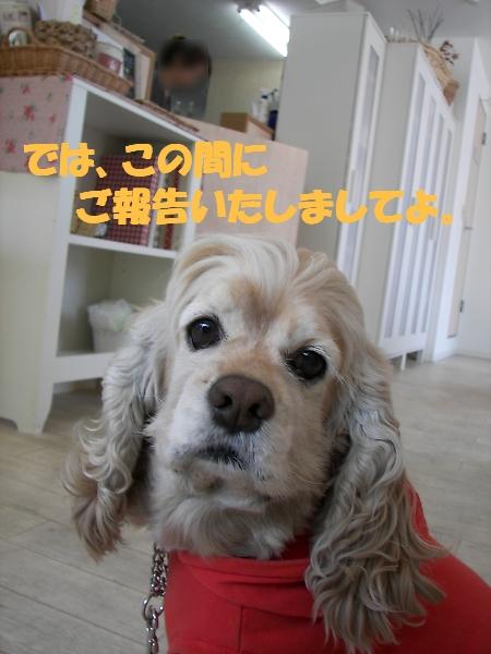 b0067012_027152.jpg