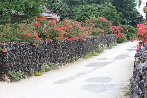 南国の雨 竹富島_a0071514_2159204.jpg