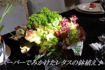 スモークサーモンのピリ辛ごまたっぷり刺身風丼 & お教室中継_d0104926_4171399.jpg