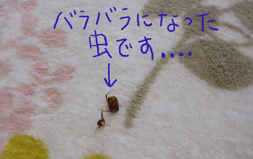 b0188228_233053.jpg