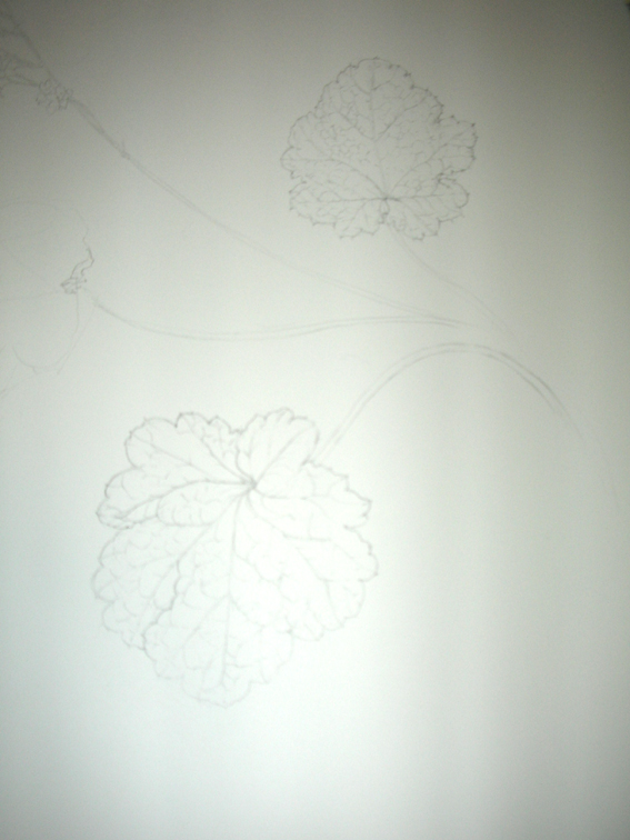 この花は?_c0206645_1823898.jpg