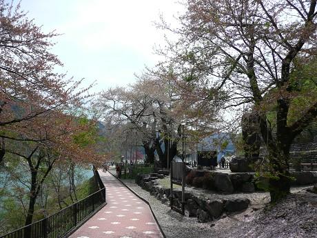 奇跡の桜_c0057946_22232863.jpg