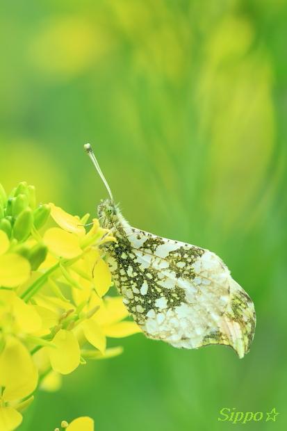 ■■ Yellow rain ■■_c0195662_23572261.jpg