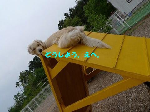 d0043478_043390.jpg