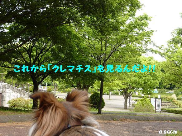 c0189388_1814618.jpg