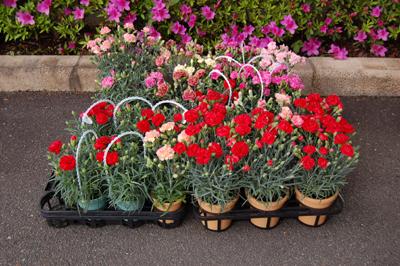 沢山のお花をいただきました。_a0154110_11181692.jpg