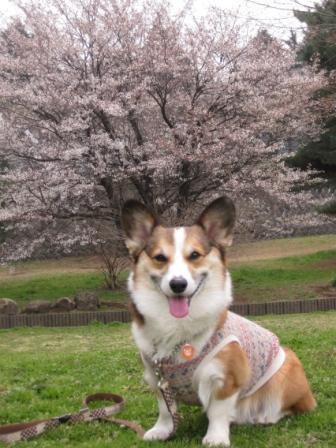 桜の季節 2010 ②_f0155118_7112586.jpg