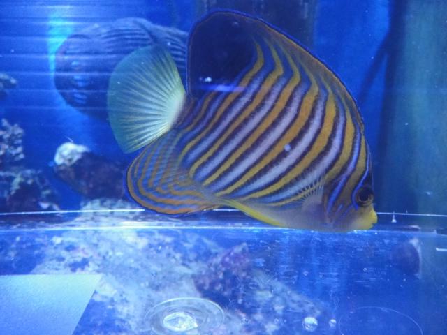 海水魚・サンゴ_f0189122_13253976.jpg