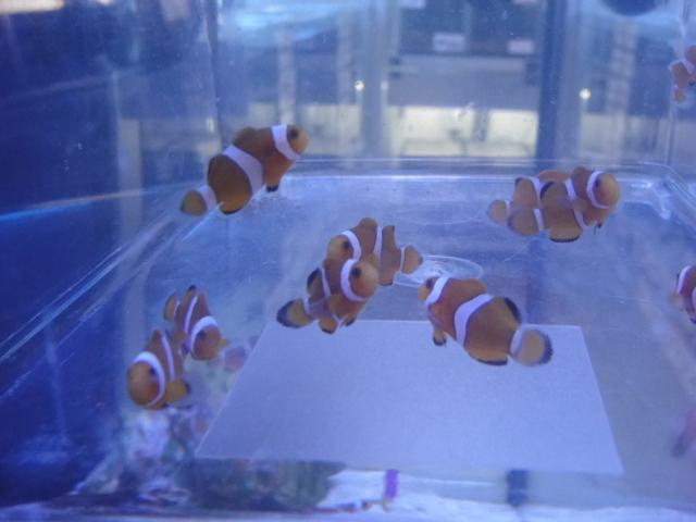 海水魚・サンゴ_f0189122_13261866.jpg
