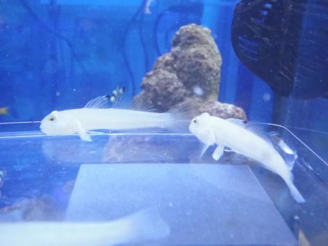 海水魚・サンゴ_f0189122_13284055.jpg