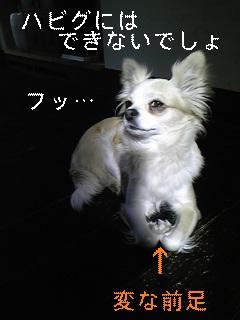 前足_f0148927_112483.jpg
