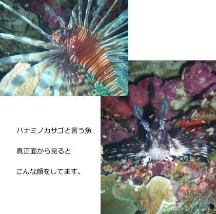 潜って潜って・・・_d0113636_901482.jpg