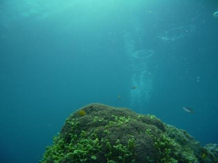潜って潜って・・・_d0113636_97666.jpg
