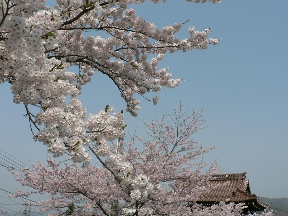 町中標準木とその界隈_d0001843_8544296.jpg