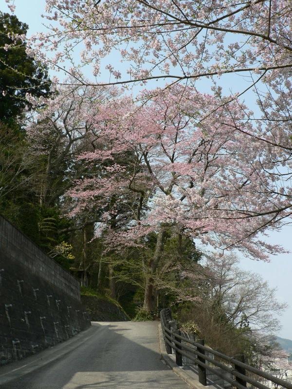 町中標準木とその界隈_d0001843_857950.jpg