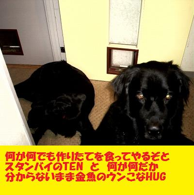 d0128364_13502743.jpg