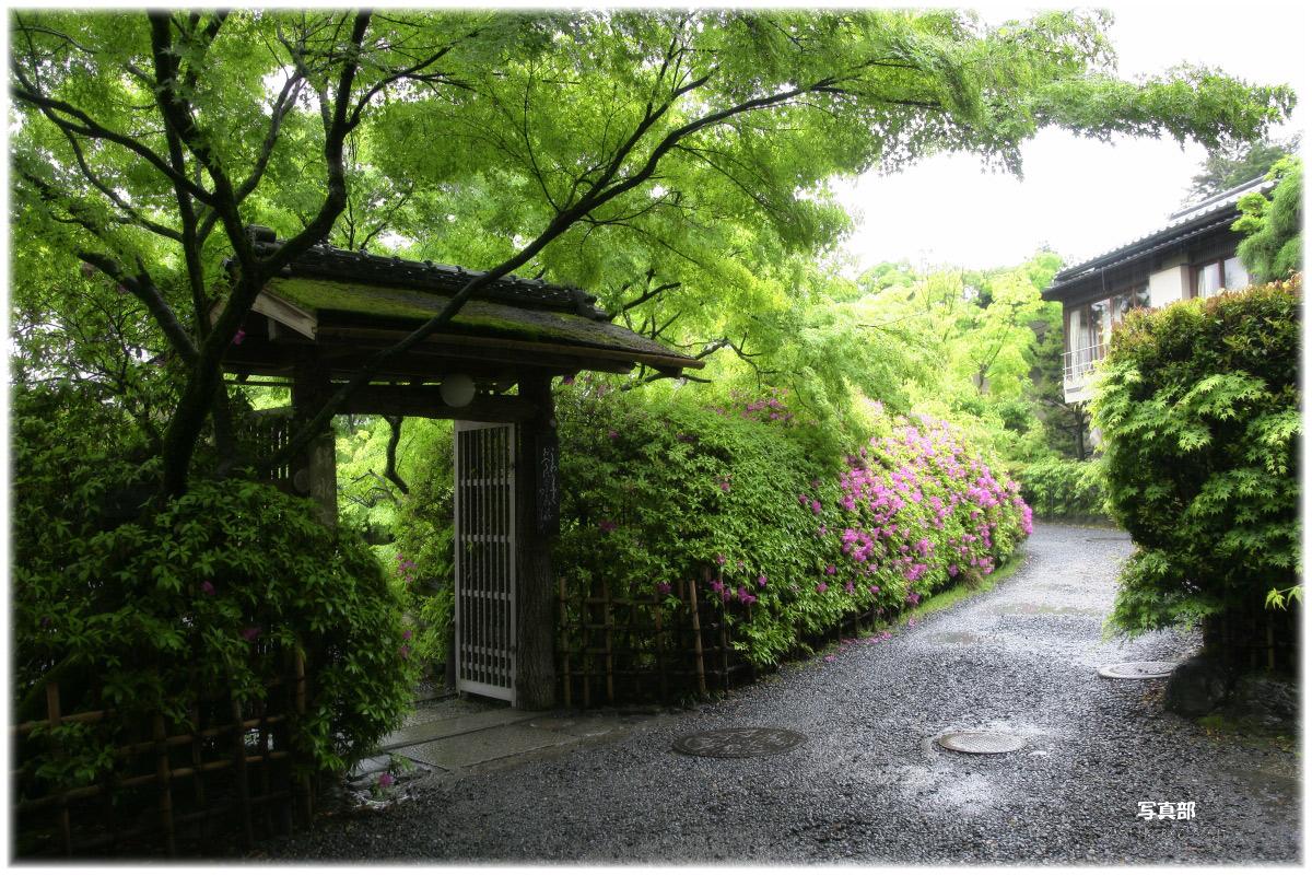 京都  長岡天神 つつじ_f0021869_08025.jpg