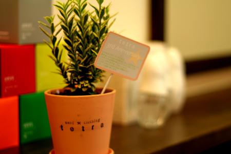 tetraさん三周年おめでとうございます☆_a0133078_1529395.jpg
