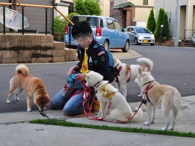 4匹で仲良くお散歩だ!_a0126590_23115190.jpg