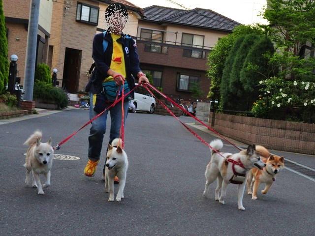 4匹で仲良くお散歩だ!_a0126590_23133534.jpg