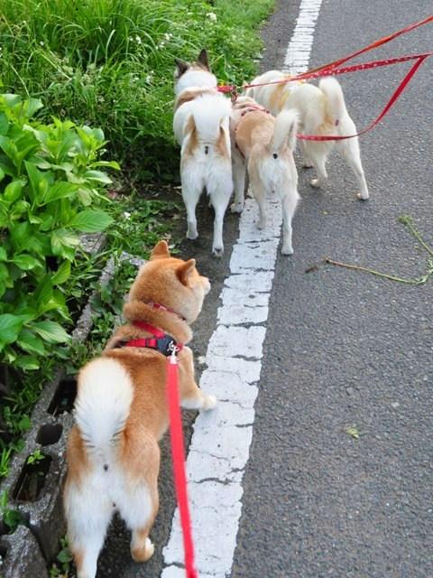 4匹で仲良くお散歩だ!_a0126590_23183989.jpg
