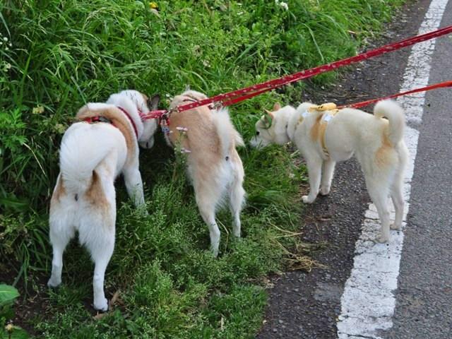 4匹で仲良くお散歩だ!_a0126590_2319207.jpg