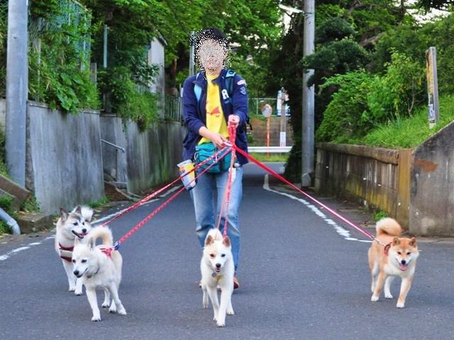 4匹で仲良くお散歩だ!_a0126590_23213915.jpg