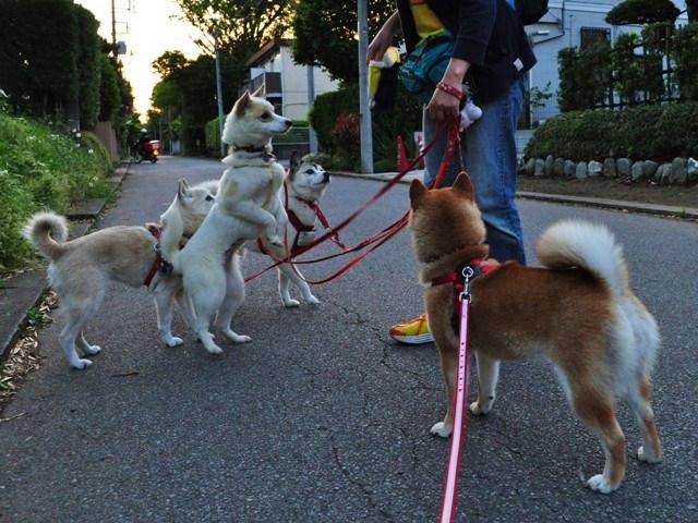 4匹で仲良くお散歩だ!_a0126590_23224654.jpg