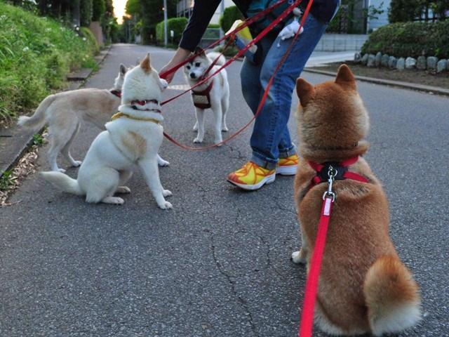 4匹で仲良くお散歩だ!_a0126590_23233118.jpg