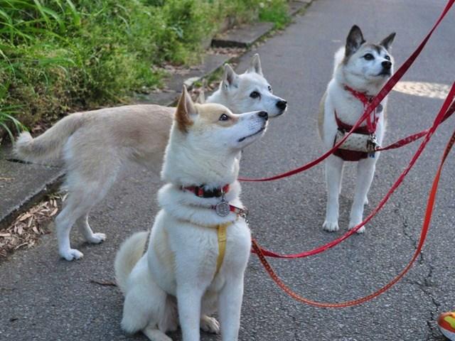 4匹で仲良くお散歩だ!_a0126590_2323512.jpg
