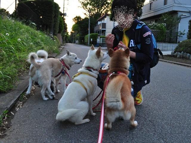 4匹で仲良くお散歩だ!_a0126590_2325177.jpg