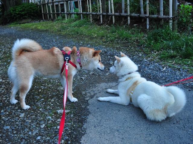 4匹で仲良くお散歩だ!_a0126590_2326278.jpg