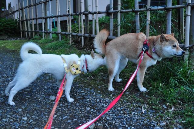 4匹で仲良くお散歩だ!_a0126590_23265773.jpg