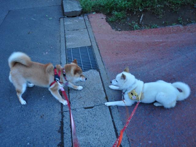 4匹で仲良くお散歩だ!_a0126590_23273347.jpg