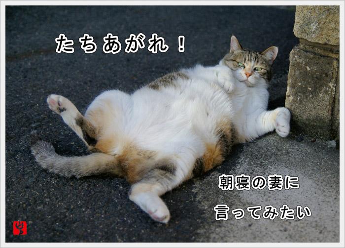 c0186592_18402989.jpg
