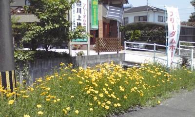 ☆快晴_a0125198_11584636.jpg