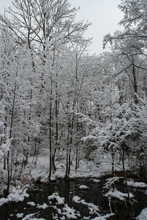 2010.4.24  朝起きると雪が_d0160199_23245816.jpg