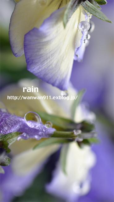 a0112204_15505167.jpg