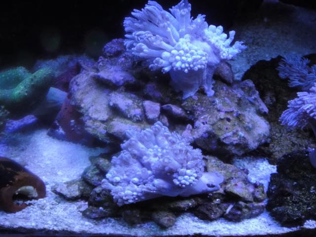 海水魚・サンゴ_f0189122_1255369.jpg
