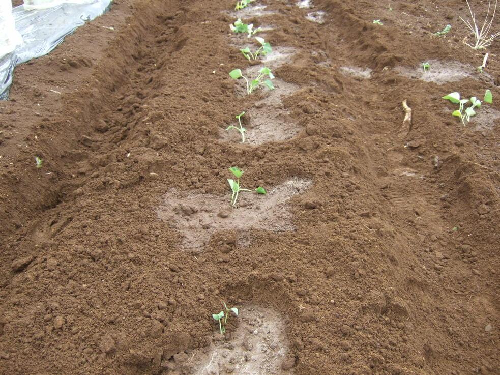 夏野菜の植え付け...._b0137932_18502569.jpg