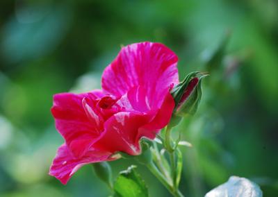 花の精は_c0085543_22217.jpg